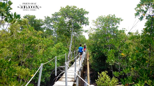 Some parts of the mangrove forest is so dense so a makeshift bridge was constructed. This also leads to the crab culture pond.
